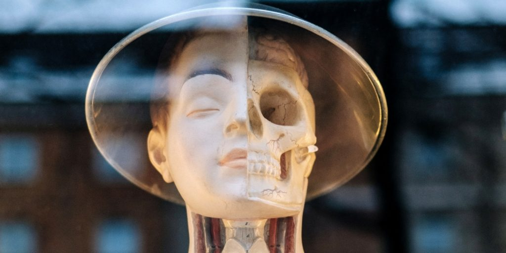 Human Face X-Ray Style